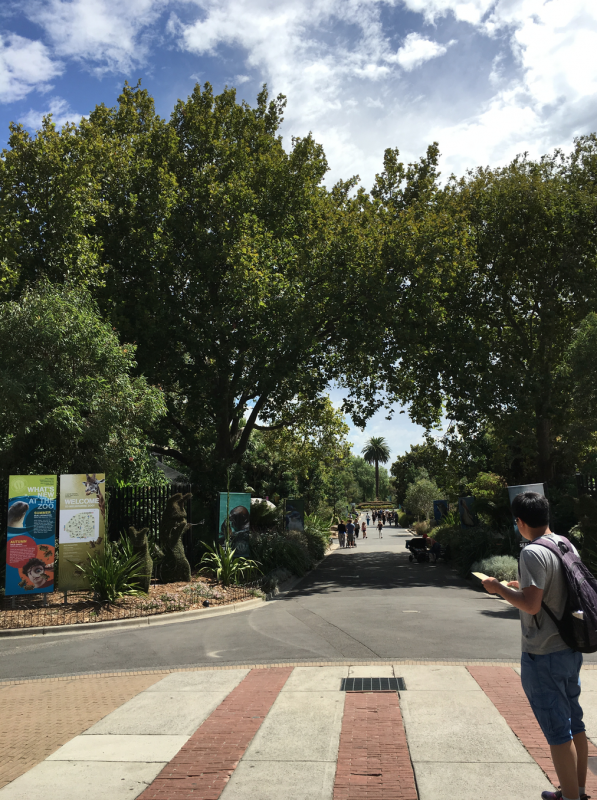 Melbourne zoo grounds
