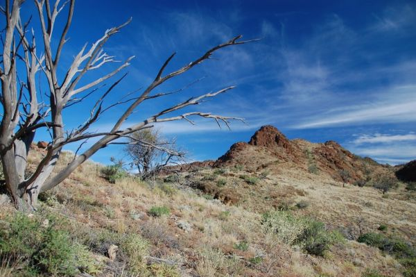 A picture of a tree without leaves on a hill in a desert, with a much larger tree behind it, and a deep blue sky