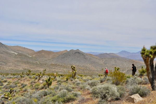 A picture of two researchers walking through the death valley dessert, showing swathes of cacti and gorse, with large hills in the background