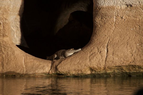 A crocodile sitting inside a cave, by a body of water